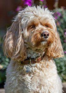 Ruby Sousa Law Dog